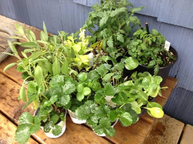 Garden03 materials