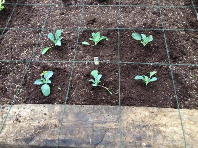 Garden06 Planted