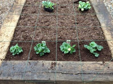 Garden08 Planted